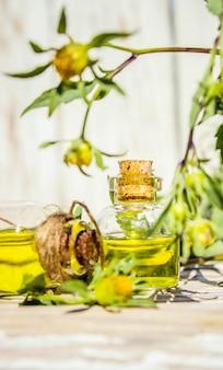 Collage van kruiden en etherische olie. natuur.