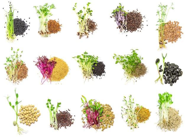 Collage van verschillende microgreens op een witte achtergrond. selectieve aandacht. natuur.