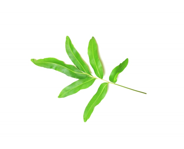 Collectie tropisch groen varenblad