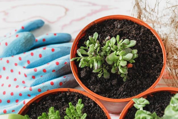 Collectie van verschillende kamerplanten, tuinieren handschoenen, potgrond en troffel op witte houten achtergrond. potting kamerplanten achtergrond.