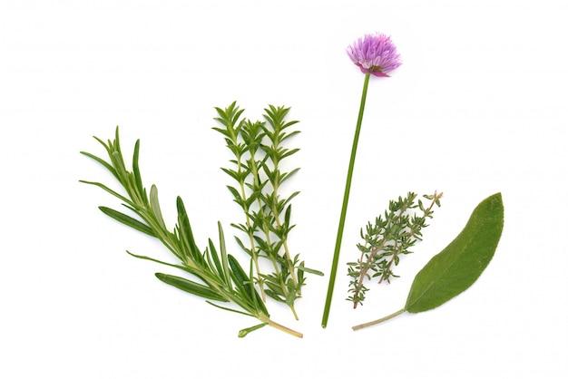 Collectie van verse aromatische kruiden op witte achtergrond