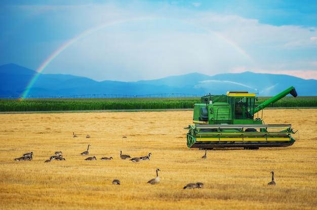 Colorado oogst