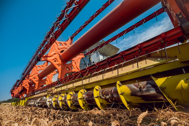Combineer harvester in actie op tarweveld. proces om een rijp gewas te verzamelen.