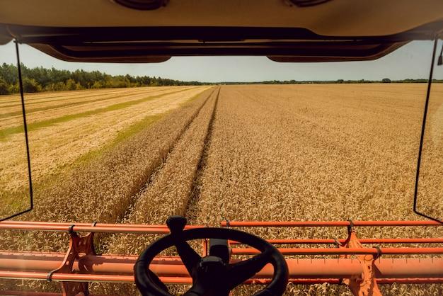 Combineer harvester in actie op tarweveld.