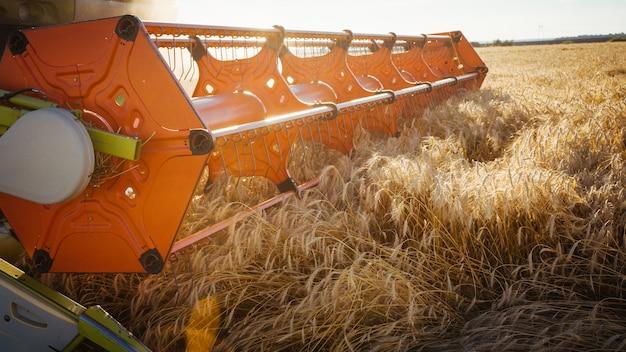 Combineer harvester oogst rijpe tarwe. rijpe oren van gouden veld op de achtergrond van de zonsondergang bewolkte oranje hemel. . concept van een rijke oogst. landbouw imago.