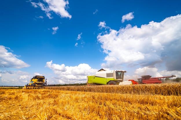 Combineer het oogsten van rijpe gouden tarwe in het veld