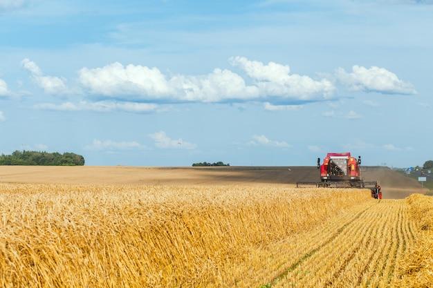 Combineren harvester oogst tarwe op zonnige zomerdag.