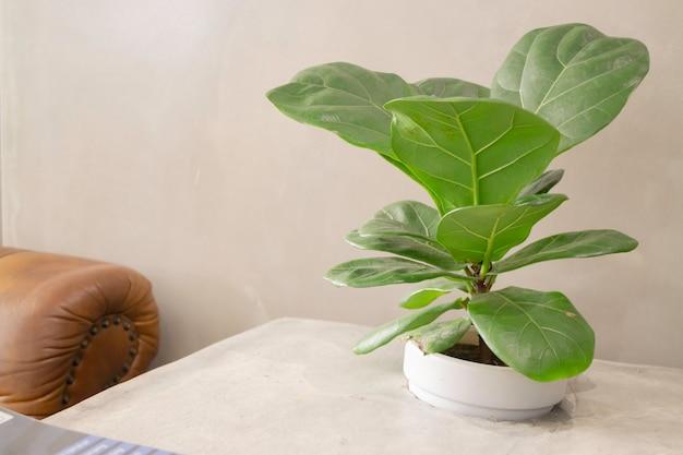 Comfortabel co-working space-interieur met groene plant