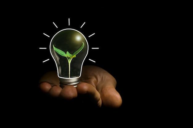 Concept afbeelding van een gloeilamp in de hand met een plant erin
