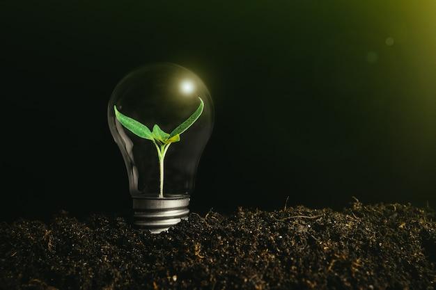 Concept afbeelding van een gloeilamp op de grond met een plant erin