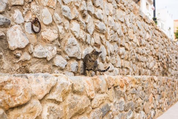 Concept dakloze dieren - leuke kat buitenshuis.