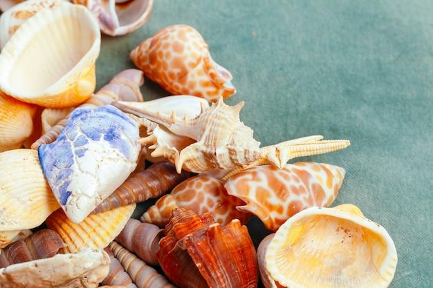 Concept de zomertijd met vissenster en zeeschelpen