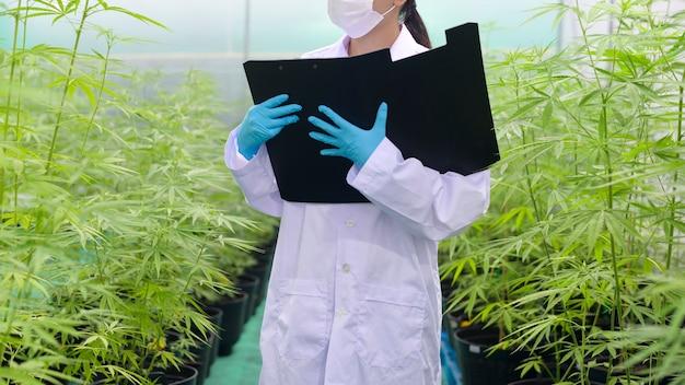 Concept van cannabisplantage voor medicinale doeleinden, een wetenschapper verzamelt gegevens over de binnenkwekerij van cannabis sativa
