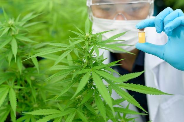 Concept van cannabisplantage voor medisch