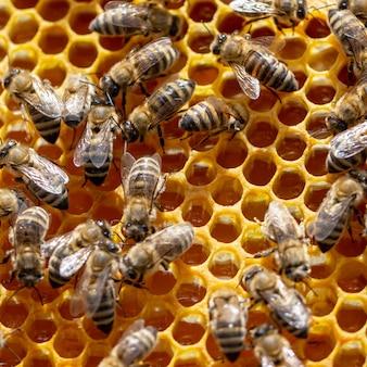 Concept van de bijenteelt, de textuur van een honingraatcel, waarop de bijen bewegen en werken.
