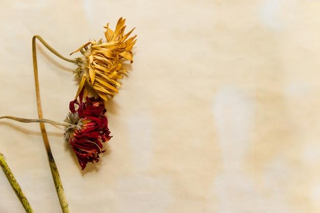 Concept van de tijd verstrijkt met verwelkte bloemen op oude papieren
