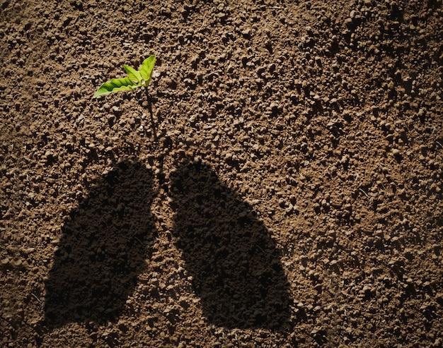 Concept van het planten van bomen voor frisse lucht. dag van de aarde