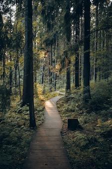 Concept van natuur, reis, reizen, trekking en zomer. verticaal schot van weg in park dat tot bebost gebied leidt. buiten mening van houten promenade langs hoge pijnbomen in ochtendbos