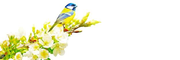 Concept van vogelliefhebbers en vogels kijken. een schoonheid van de omgeving natuur. ornithologie.