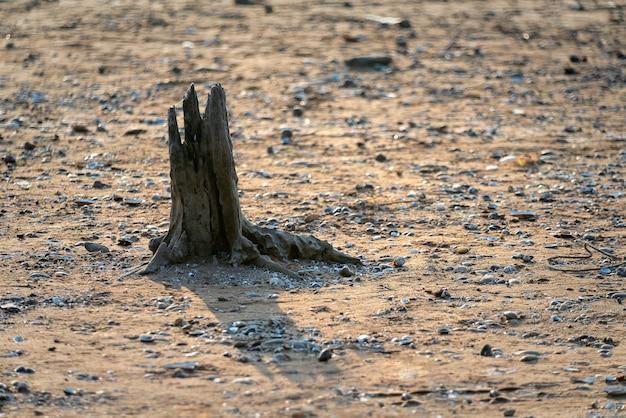 Concept van wereldwijde verandering die leidt tot droogte en hongersnood toont dode boomstronken op het zand