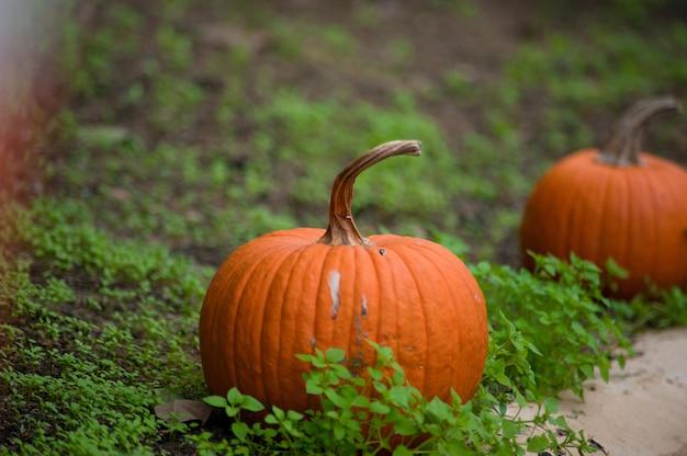 Concept voor herfst traditionele vakantie halloween