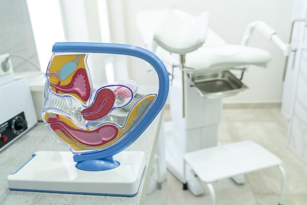 Concept voor studie van anatomie van baarmoeder en aanhangsels, illustratie van vrouwelijk reproductief systeem