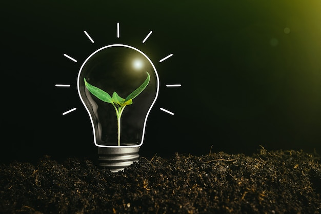 Conceptenbeeld van een gloeilamp ter plaatse met een binnen plant