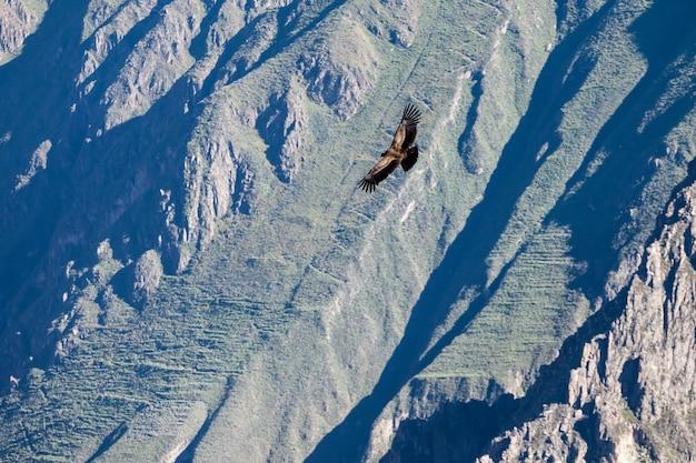 Condor vlucht
