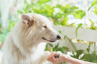 Contact tussen hondenpoot en menselijke hand, gebaar van genegenheid