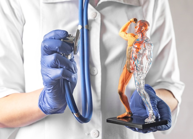 Controle van de bloedsomloop en spierstelsels van het menselijk lichaam gezondheidszorg concept gezonde spieren en auto...