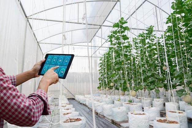 Controleer de kwaliteit van de plantengroei op de boerderij met technologie biologische groente om op de boerderij te planten naar het milieu van de kwekerij