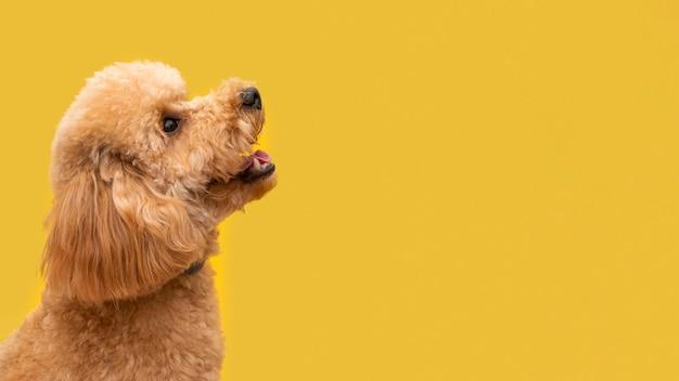 Copy-space schattige hond