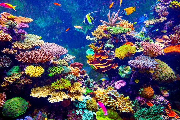 Coral reef en tropische vissen in zonlicht