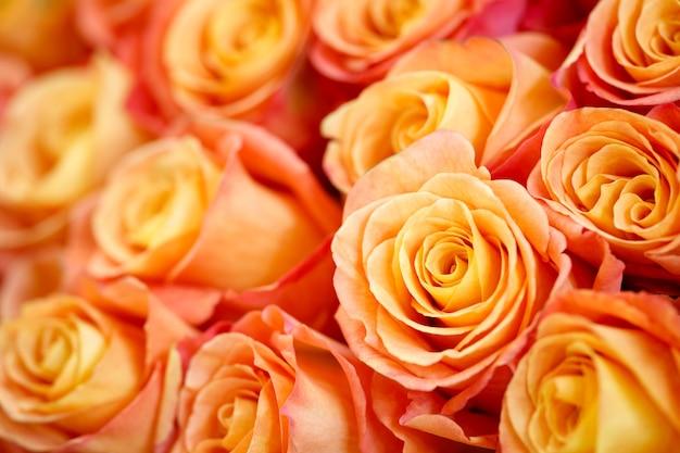 Coral rose bloem. gedetailleerd retoucheren