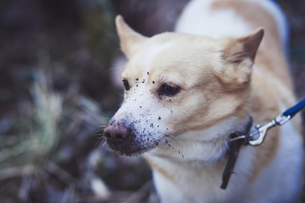 Corgi-hond in het bos