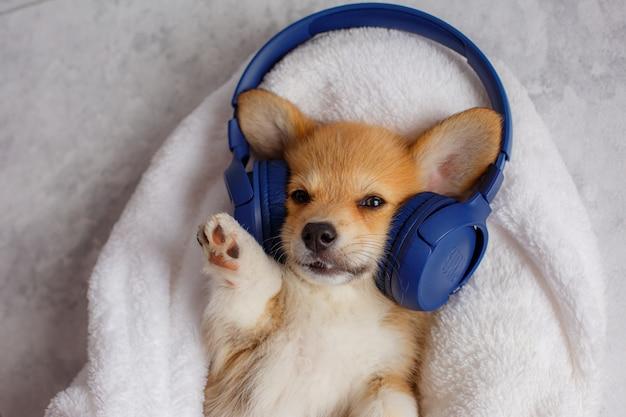 Corgipuppy met hoofdtelefoons die in een deken liggen die aan muziek luistert