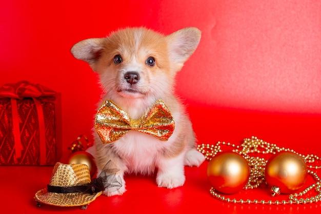 Corgipuppy op kerstmisdecor op rode achtergrond