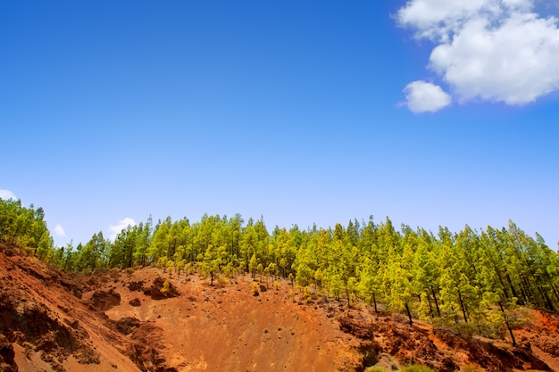 Corona forestal in nationaal park teide op tenerife