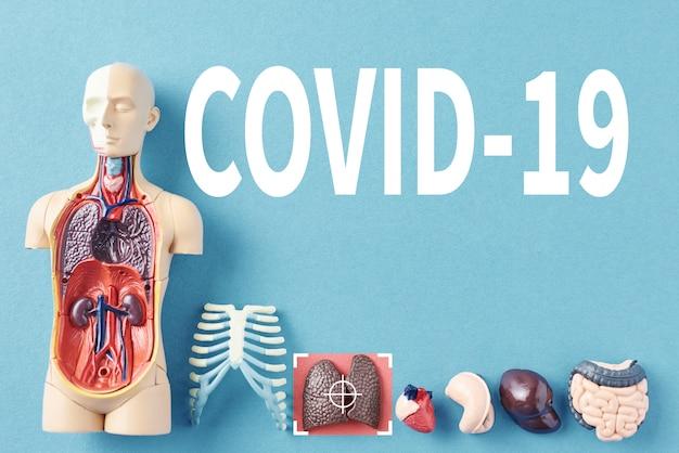 Coronavirus-epidemie concept. menselijk anatomiemodel met geïnfecteerde covid-19-viruslongen op blauwe achtergrond