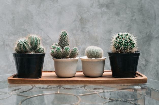 Correctie cactus in pot op tafel en muur stenen achtergrond