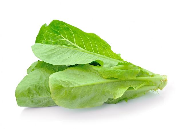 Cos lettuce op wit geïsoleerd