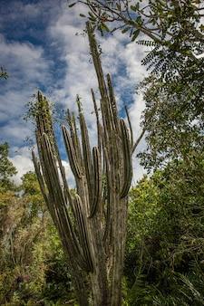 Cotubanama national park in dominicaanse republiek, padre nuestro sectie met typische vegetatie binnen en steengroeven zoals de cueva de padre nuestro en cueva del chico