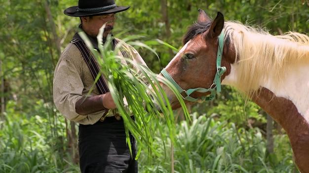 Cowboy man speelt met een paard en geeft vers gras dat met het paard in de hand wordt gehouden.