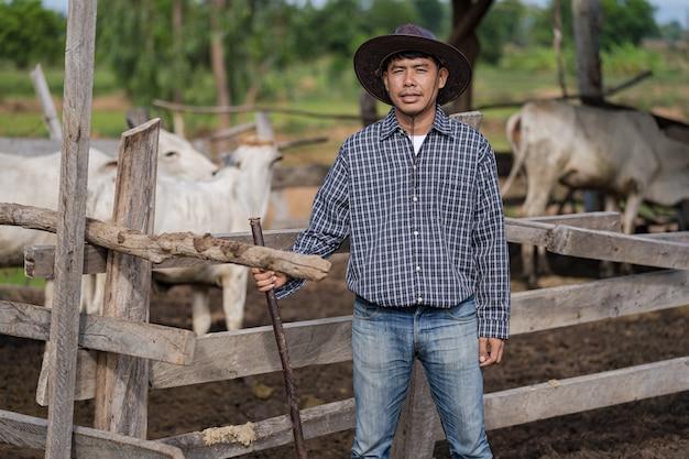 Cowman in stal en zijn koeien