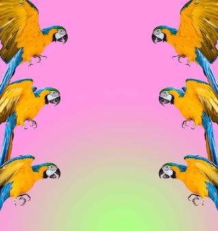 Crazy pop-art kleurrijk ultraviolet behang met ara papegaaien foto modern patroon