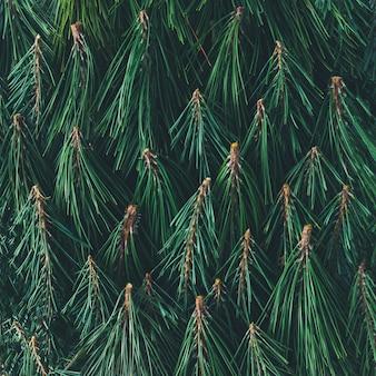 Creatief patroon gemaakt van pijnboomtakken. natuur achtergrond. plat leggen.