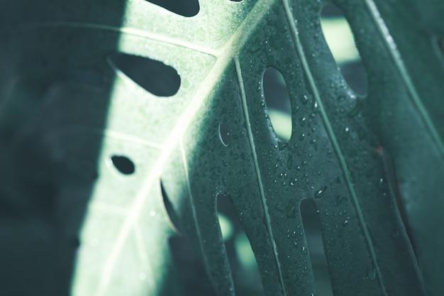 Creatieve aardindeling gemaakt van tropische bladeren en bloemen. plat leggen. zomer concept.