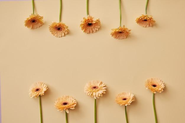 Creatieve compositie van beige bloemengerbera's op een beige achtergrond als wenskaart voor valentijnsdag of moederdag met kopieerruimte. bovenaanzicht