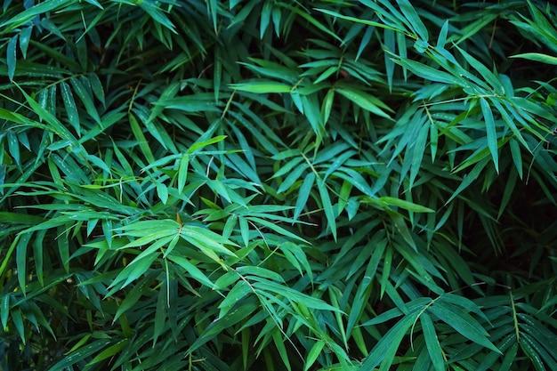 Creatieve donkergroene bamboe bladeren voor achtergrond en behang.