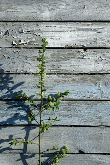 Creatieve hoogste bloeiende de bloemenbrunch a van de meningswilg op rustieke blauwe houten muur